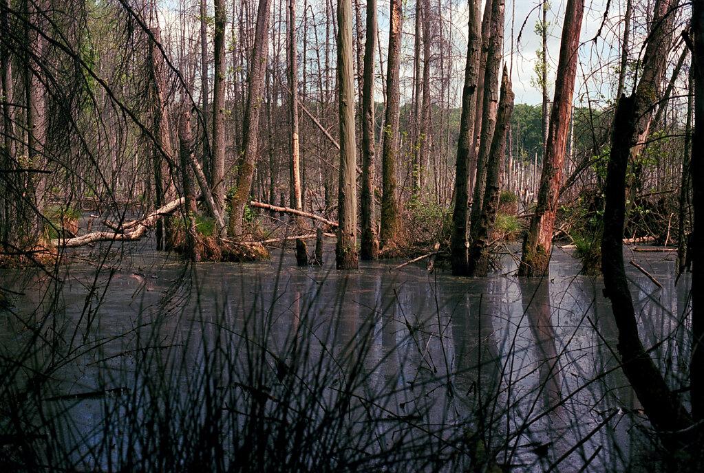 Spiegel im Sumpf