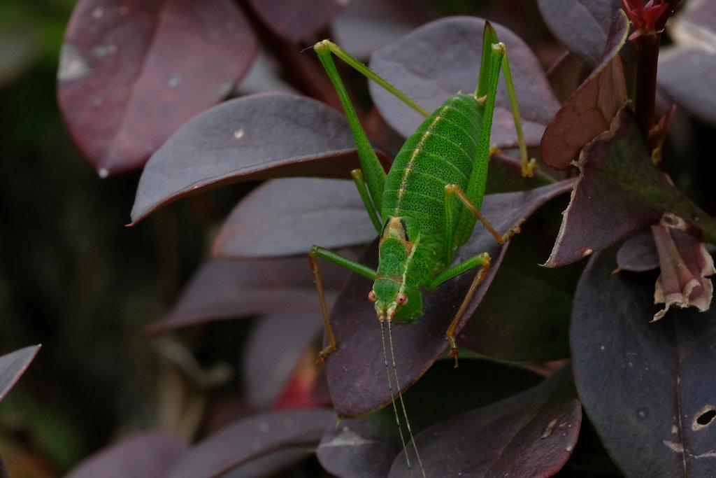 Macro grasshopper I