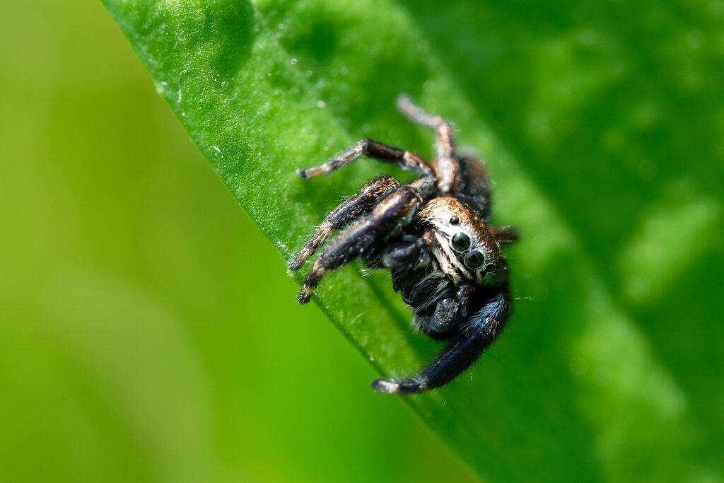 Cute macro spider
