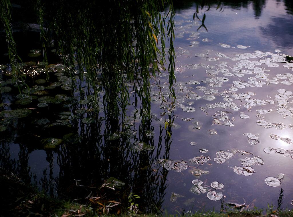 Die Weide berührt das Wasser