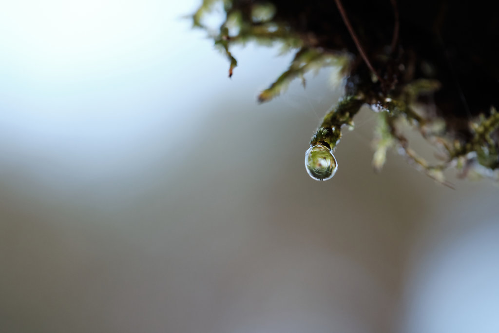 Mossy Droplet