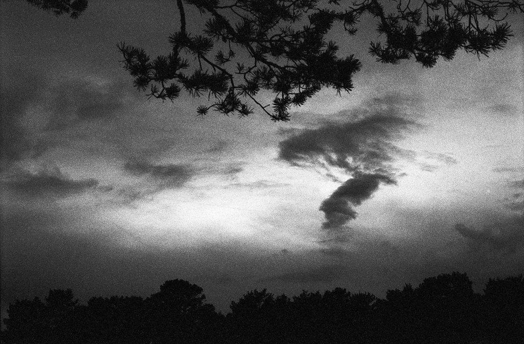 Wald und Wolken